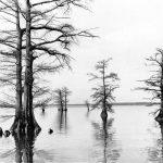 Reelfoot Lake, Tennessee 1973 © BASolomon