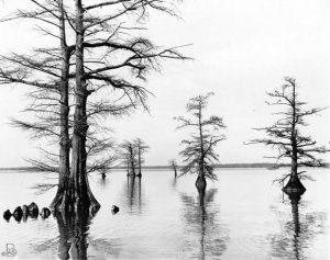 1reelfoot-lake-web