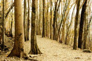 22vibrant-trees-web