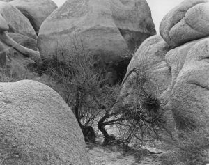 Joshua Tree Nat'l Park 2010